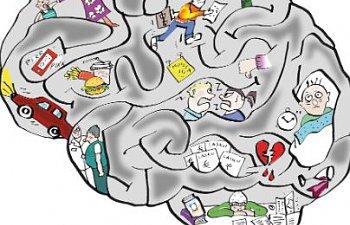 Hur fungerar min hjärna