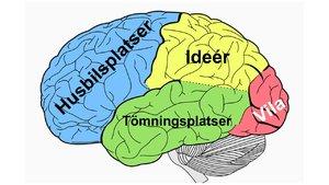 Hjärna.JPG