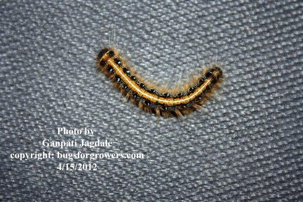 worm-caterpillar.jpg