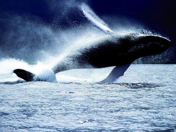 baleines_006.jpg